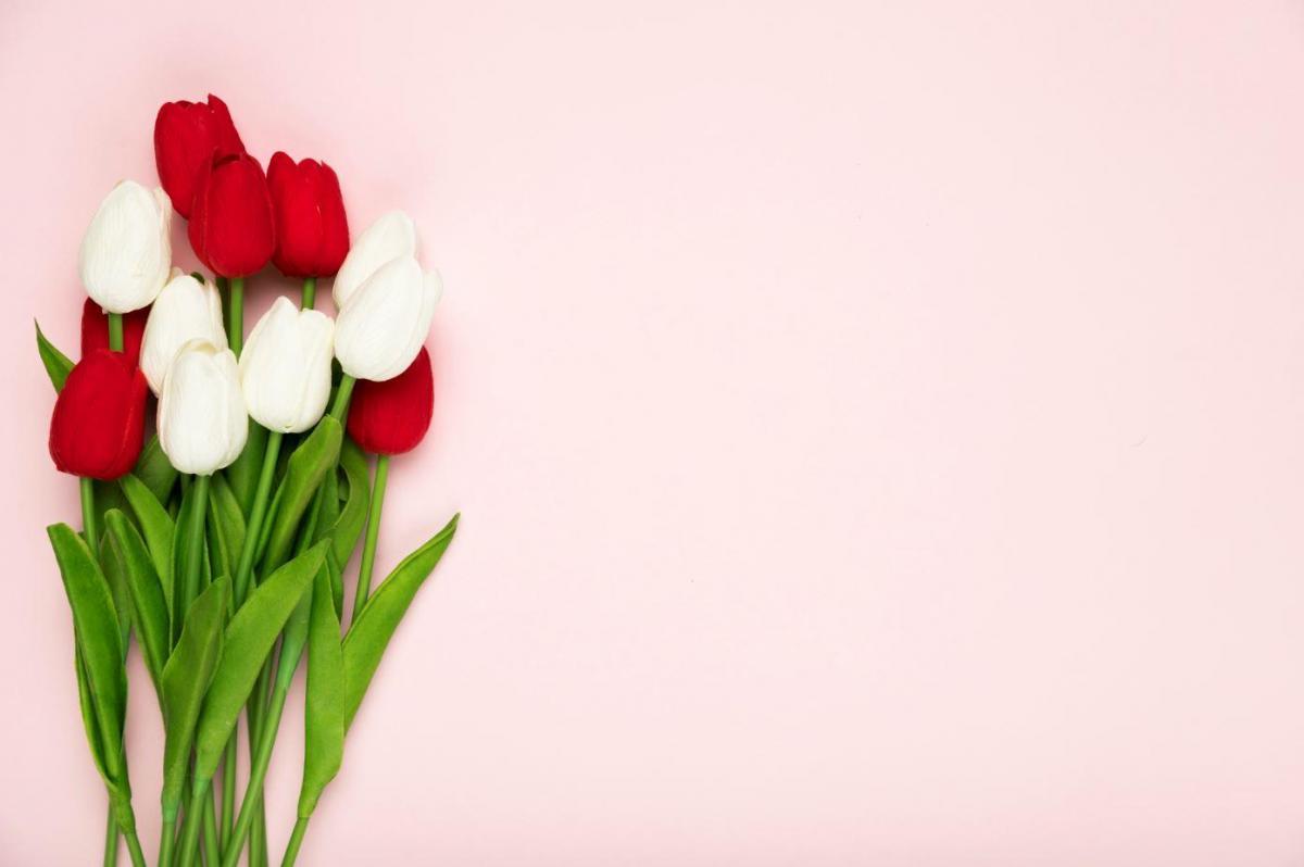 Tulipes contre le cancer